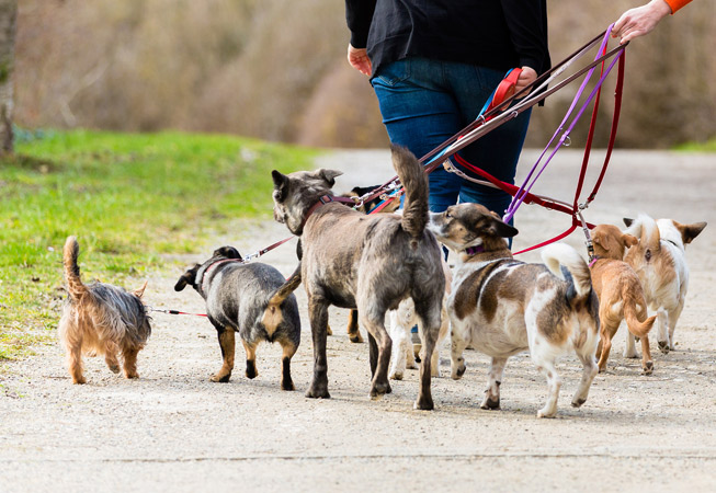 Fun Facts Dog Walkers in Buenos Aires Argentina