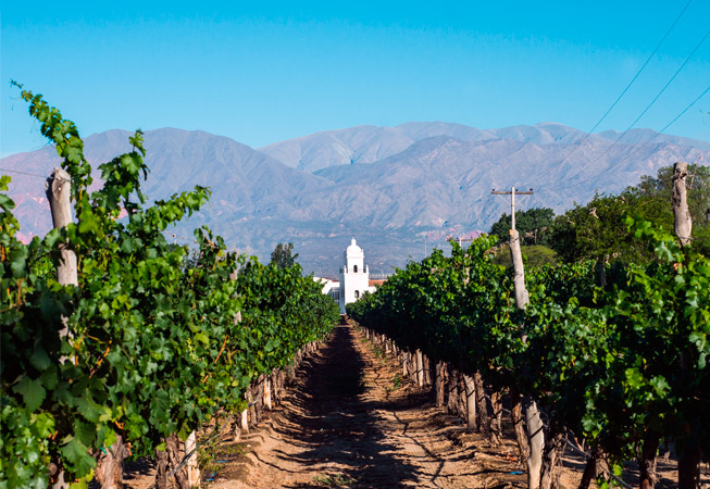 Cafayate Salta Argentina Vineyards