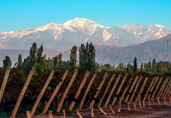 Mendoza Vineyard Argentina